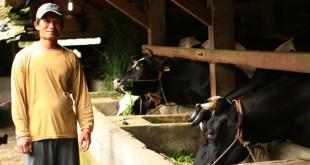 Pemberdayaan peternak sapi perah di Umbulharjo, Cangkringan Sleman DIY