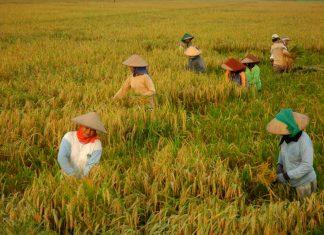 ketersediaan pangan Indonesia